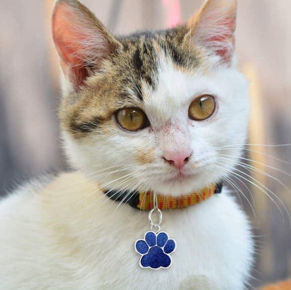 Kissalle nimilaatta edullisesti
